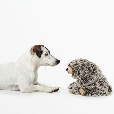 Faro-bear-koira