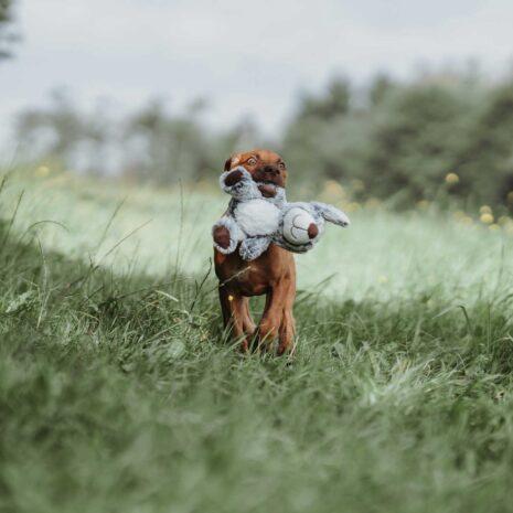 faro-koira-koira